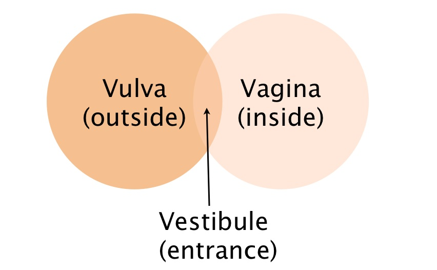 Brilliant Post your vulva