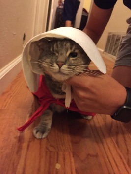 I also have a lab named Hazel and a one-eyed cat named Luna who is often  the star of my Twitter and Instagram feeds. She was a Handmaid for  Halloween this ... 19afabf10f1f