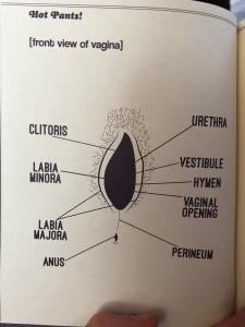 vulva hot pants